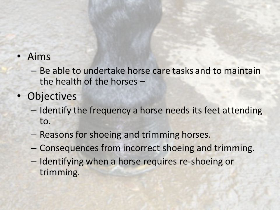 Aims Be able to undertake horse care tasks and to maintain the health of the horses – Objectives.