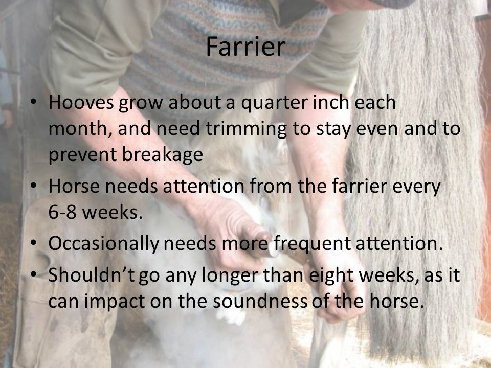 Farrier Hooves grow about a quarter inch each month, and need trimming to stay even and to prevent breakage.