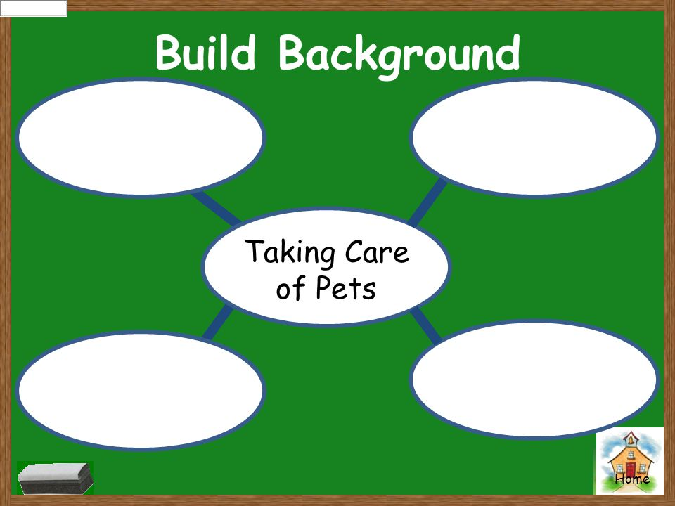 Build Background Taking Care of Pets