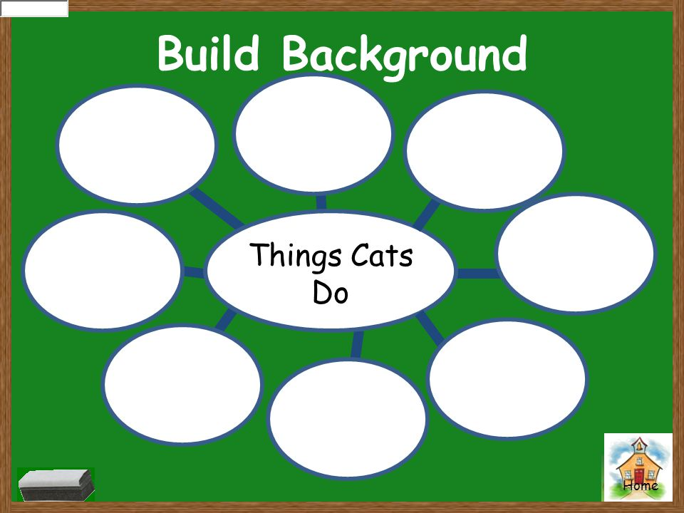 Build Background Things Cats Do
