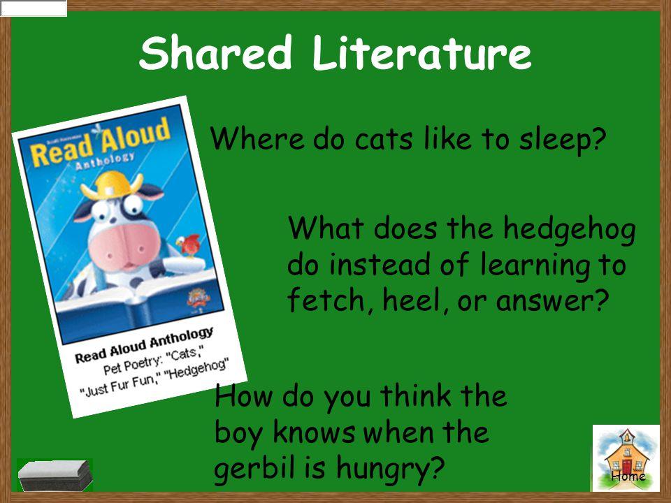 Shared Literature Where do cats like to sleep