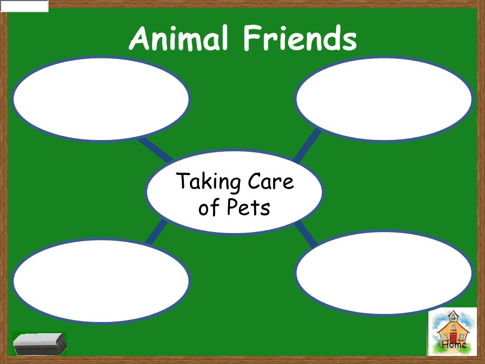 Animal Friends Taking Care of Pets