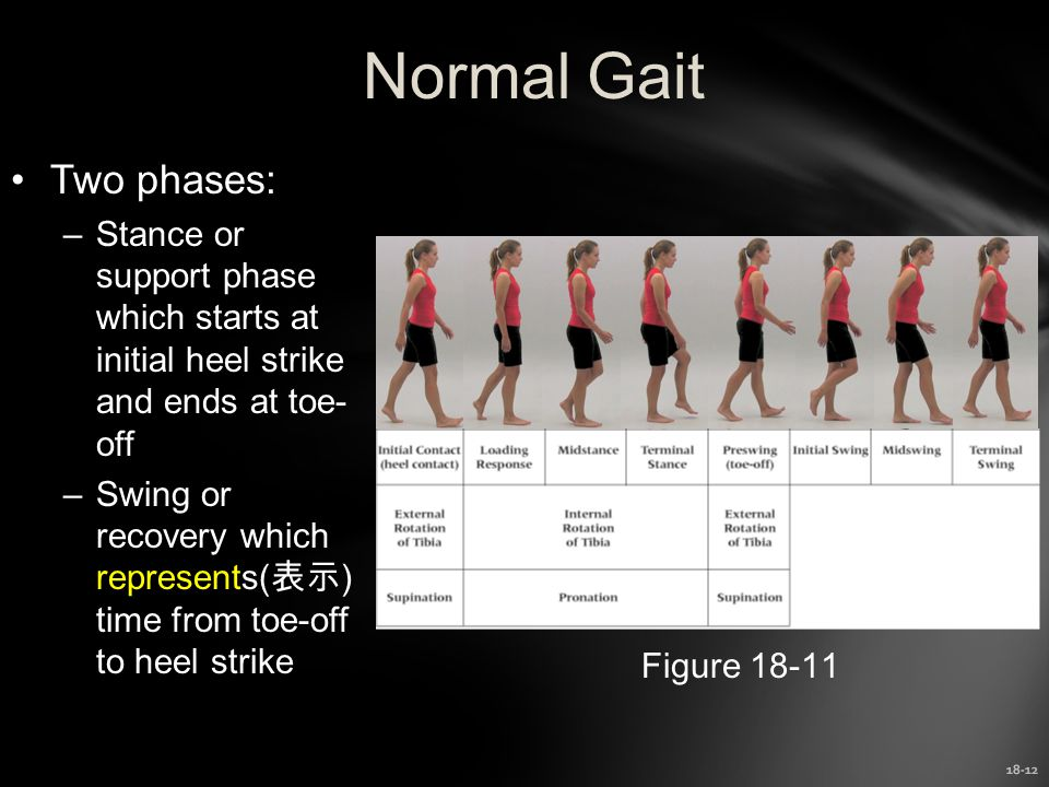 Normal Gait Two phases: