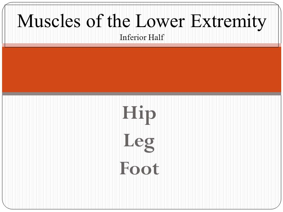 Muscles of the Lower Extremity Inferior Half