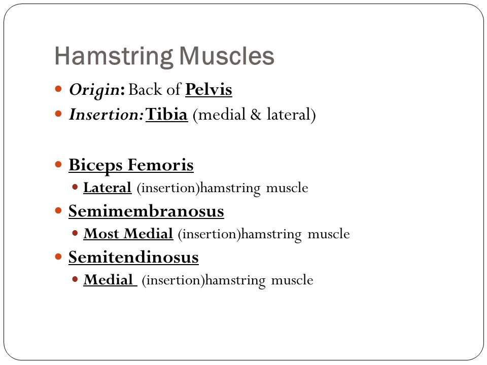 Hamstring Muscles Origin: Back of Pelvis