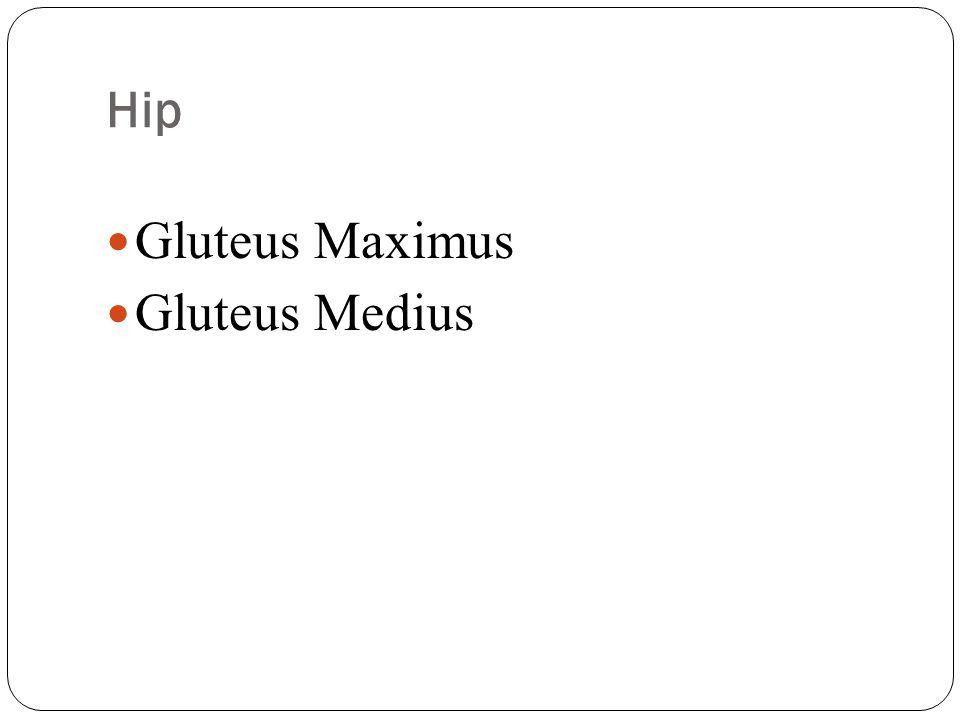 Hip Gluteus Maximus Gluteus Medius