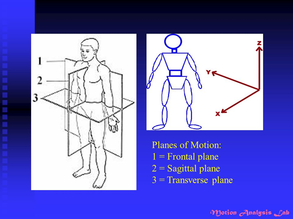 Planes of Motion: 1 = Frontal plane 2 = Sagittal plane 3 = Transverse plane