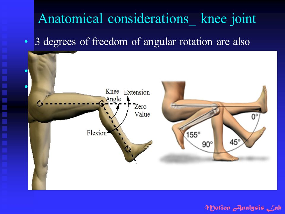 Anatomical considerations_ knee joint