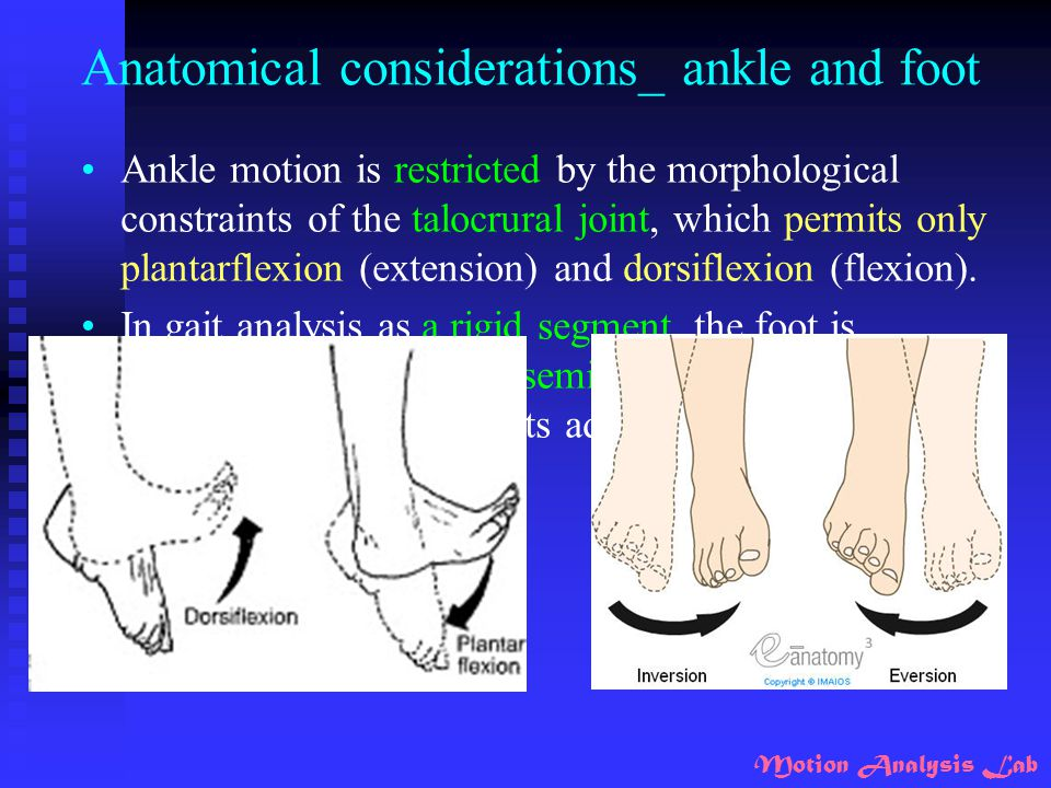 Anatomical considerations_ ankle and foot