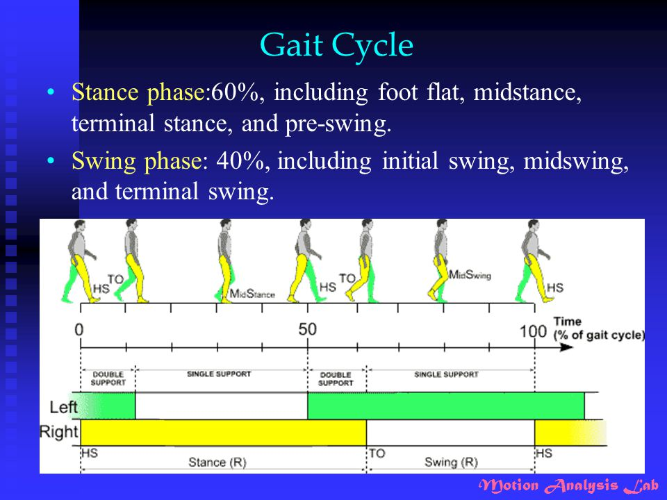 Gait Cycle Stance phase:60%, including foot flat, midstance, terminal stance, and pre-swing.