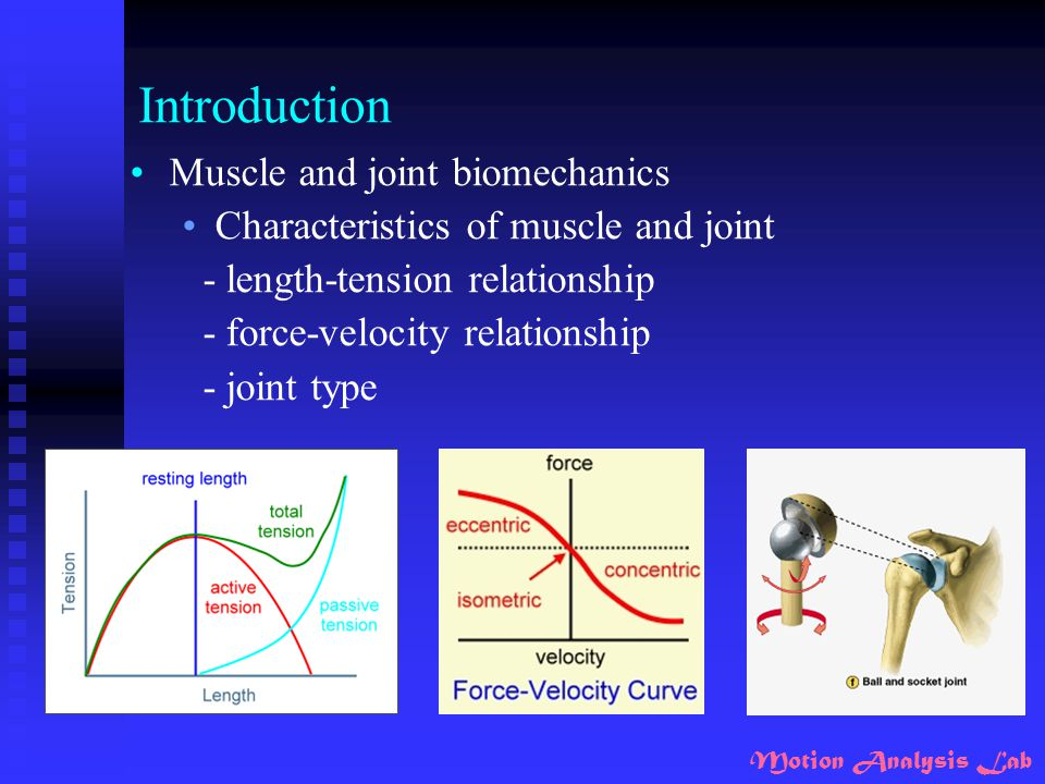 Introduction Muscle and joint biomechanics