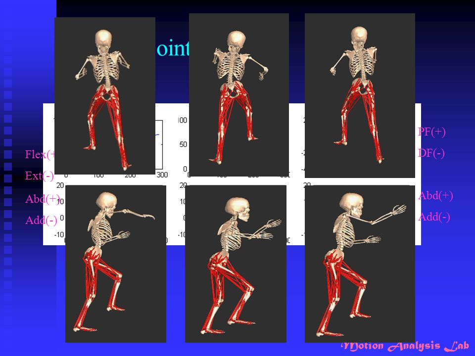 Results_ joint angle PF(+) DF(-) Flex(+) Ext(-) Abd(+) Abd(+) Add(-)