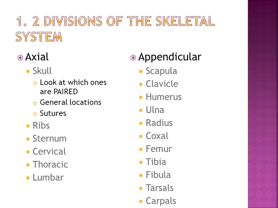 1. 2 divisions of the skeletal system