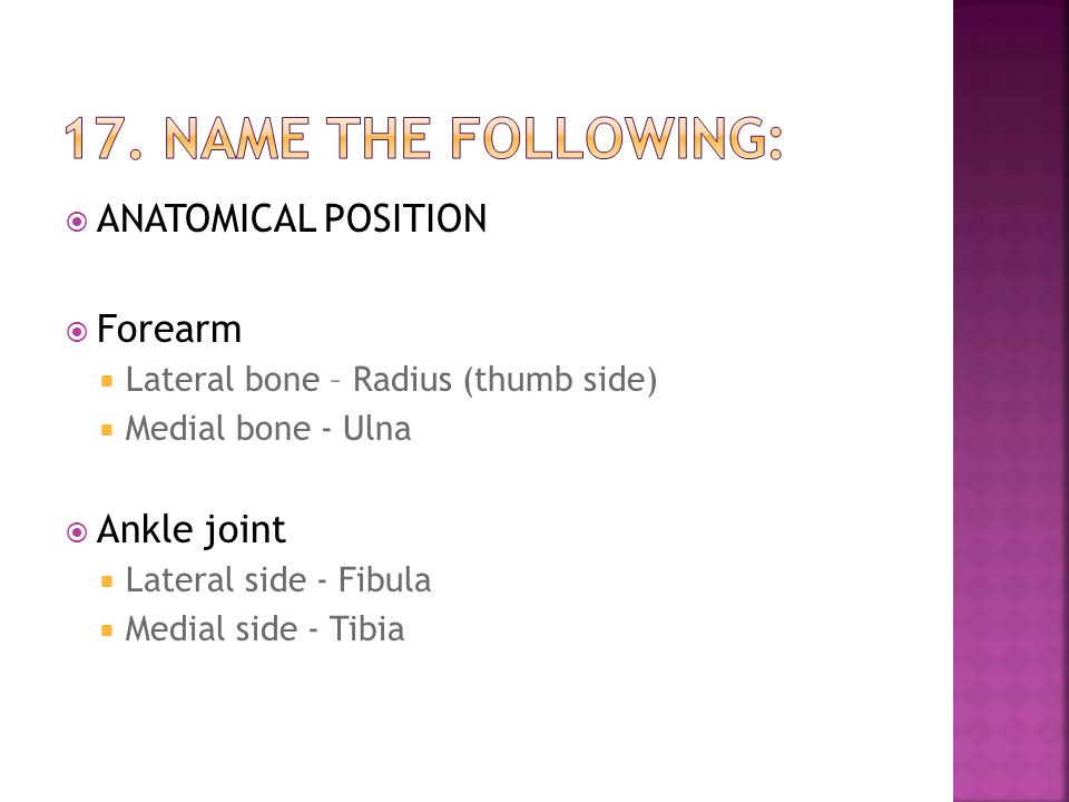 17. Name the following: ANATOMICAL POSITION Forearm Ankle joint