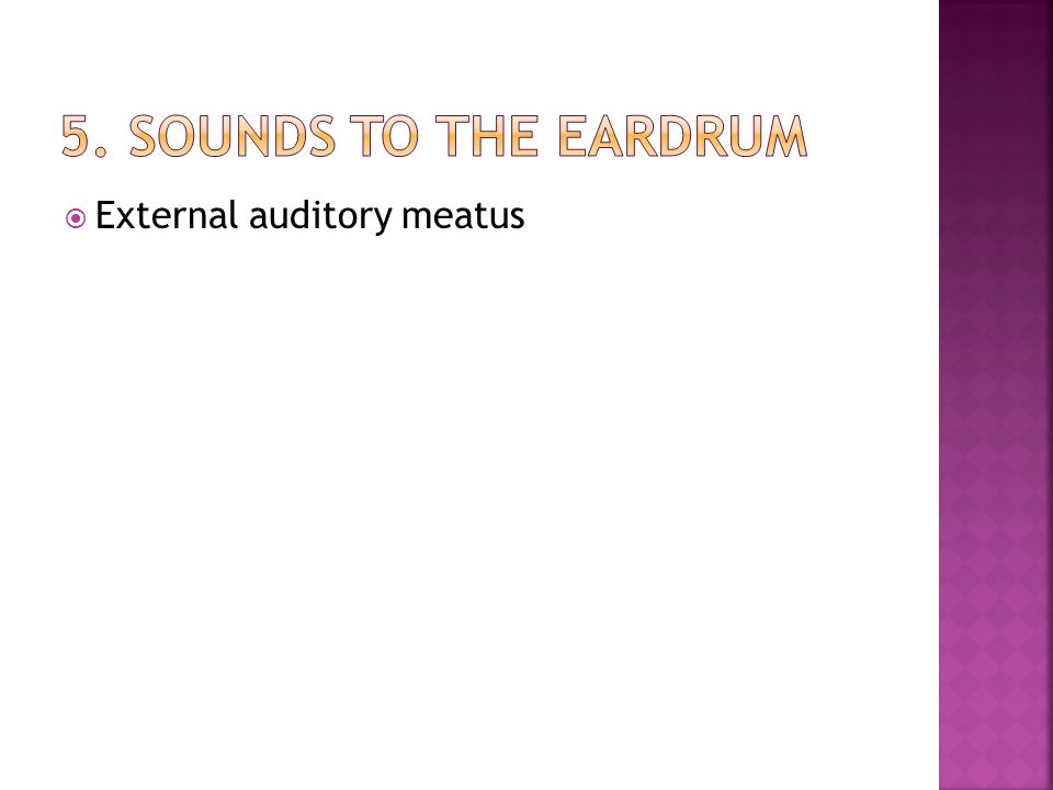 5. Sounds to the eardrum External auditory meatus