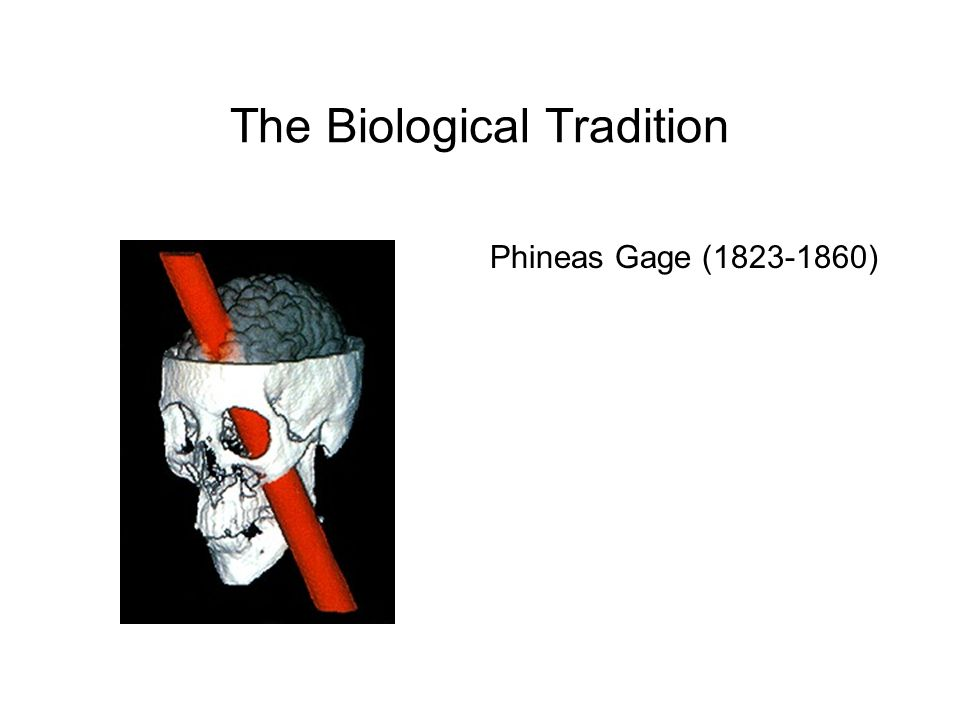 The Biological Tradition