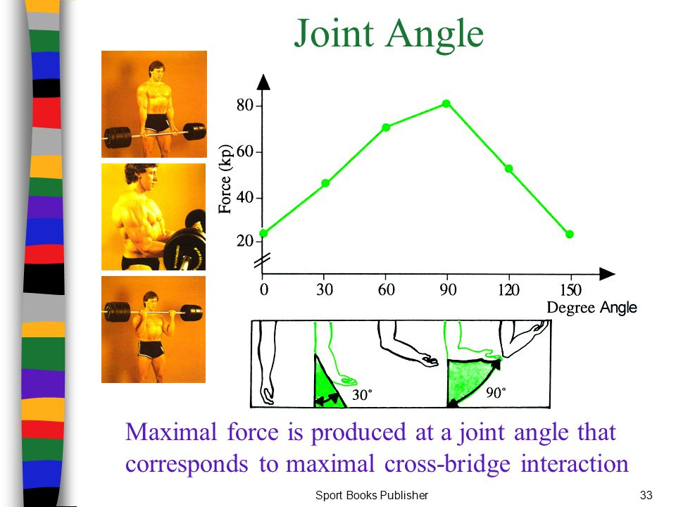 Joint Angle Maximal force is produced at a joint angle that corresponds to maximal cross-bridge interaction.