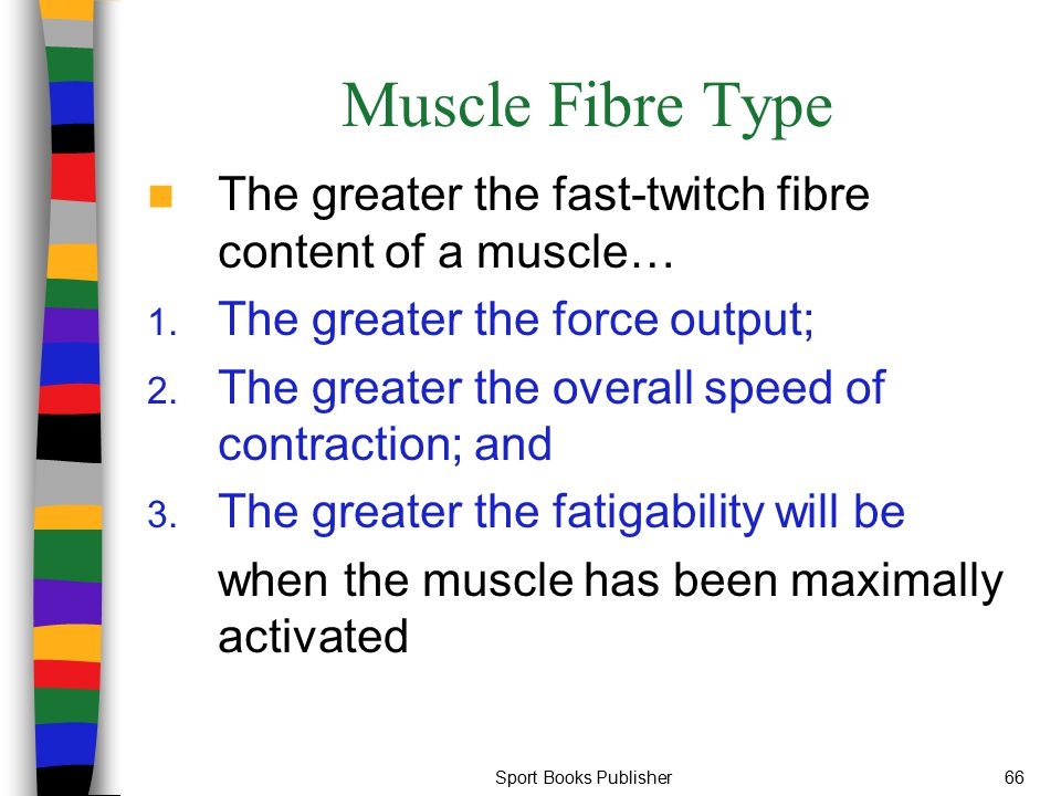 Muscle Fibre Type The greater the fast-twitch fibre content of a muscle… The greater the force output;