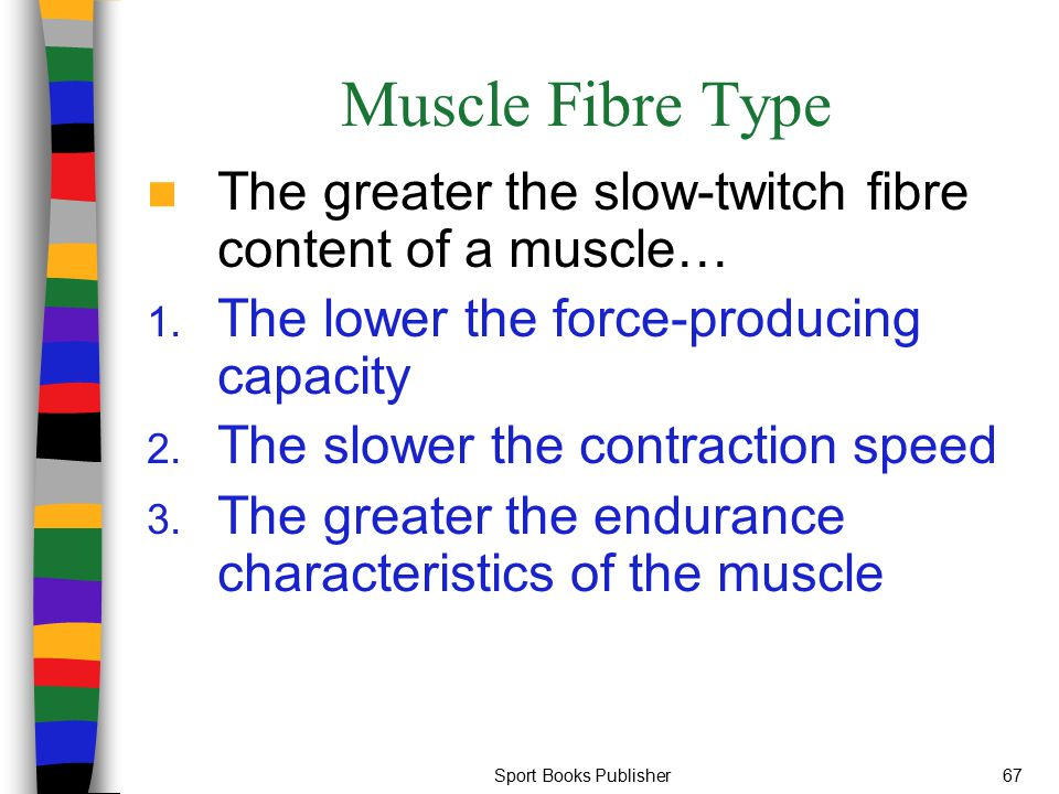 Muscle Fibre Type The greater the slow-twitch fibre content of a muscle… The lower the force-producing capacity.