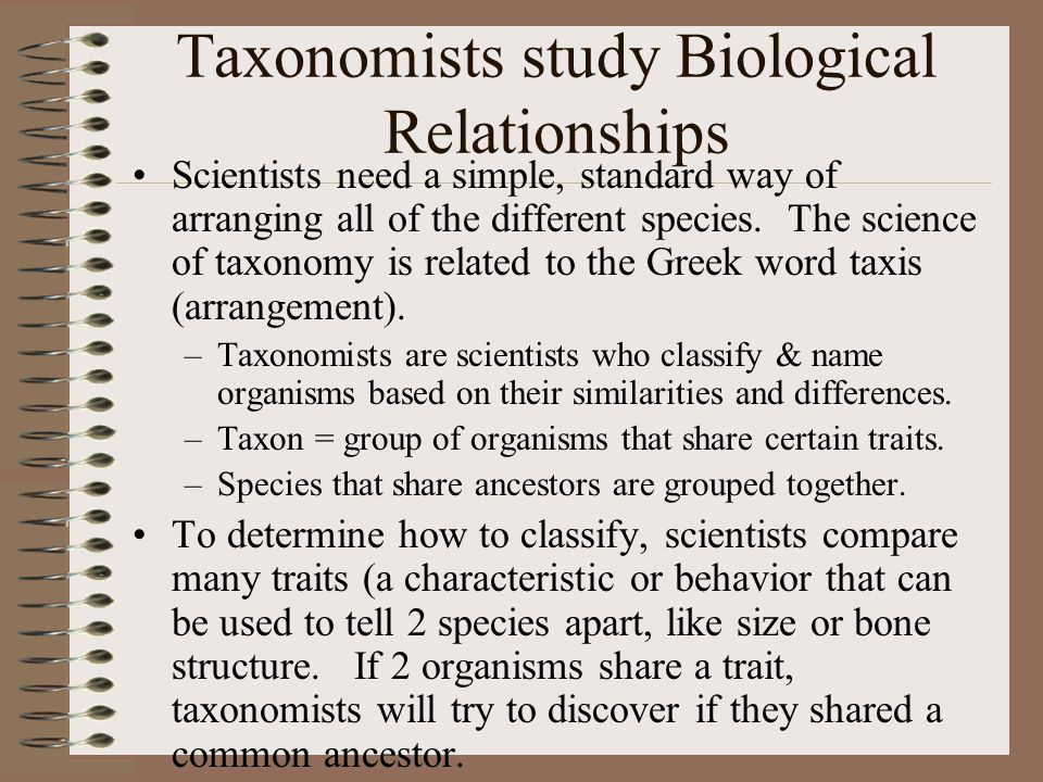 Taxonomists study Biological Relationships