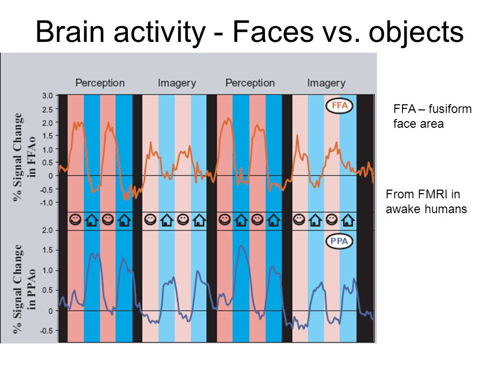 Brain activity - Faces vs. objects