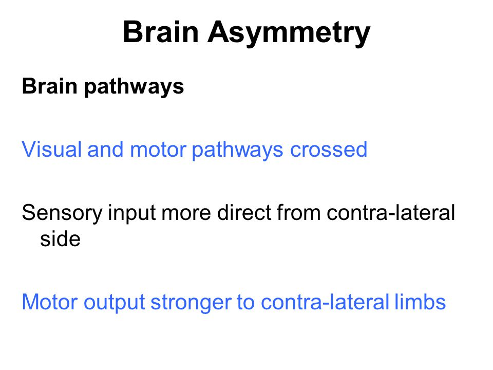 Brain Asymmetry Brain pathways Visual and motor pathways crossed