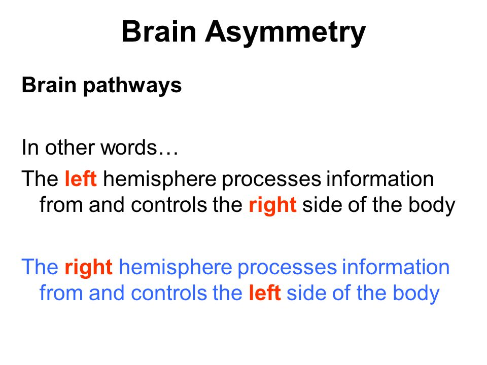 Brain Asymmetry Brain pathways In other words…