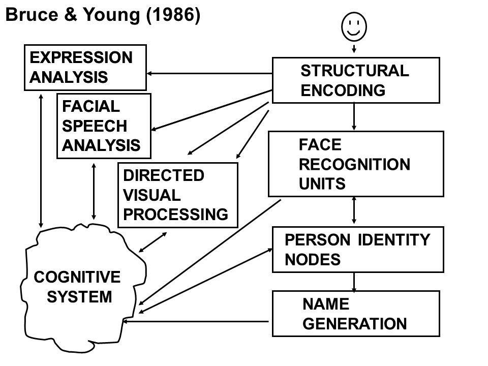 Bruce & Young (1986) EXPRESSION ANALYSIS EXPRESSION ANALYSIS