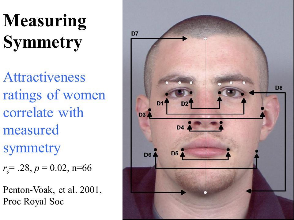 Measuring Symmetry Attractiveness ratings of women correlate with measured symmetry. rs= .28, p = 0.02, n=66.