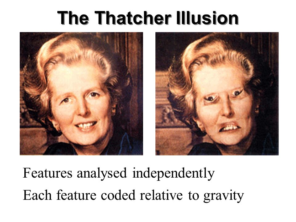 The Thatcher Illusion Features analysed independently