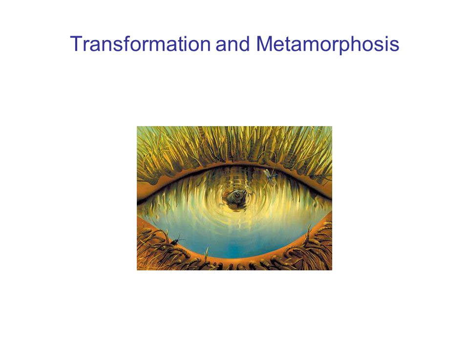 Transformation and Metamorphosis