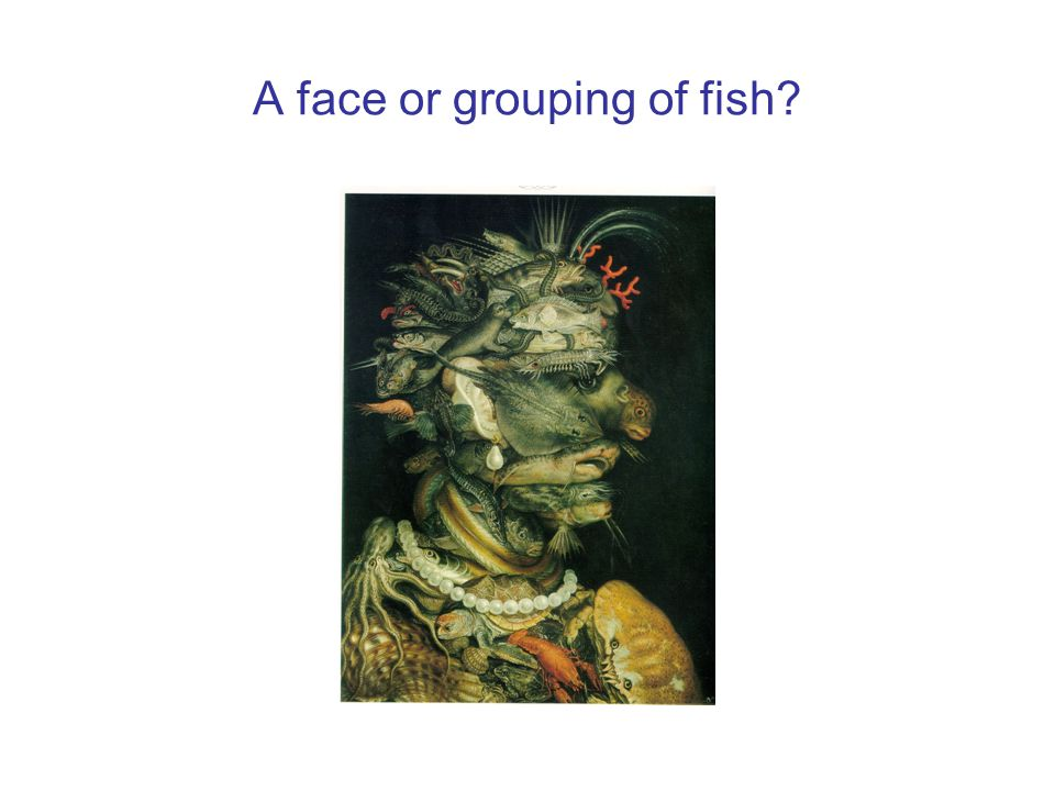 A face or grouping of fish