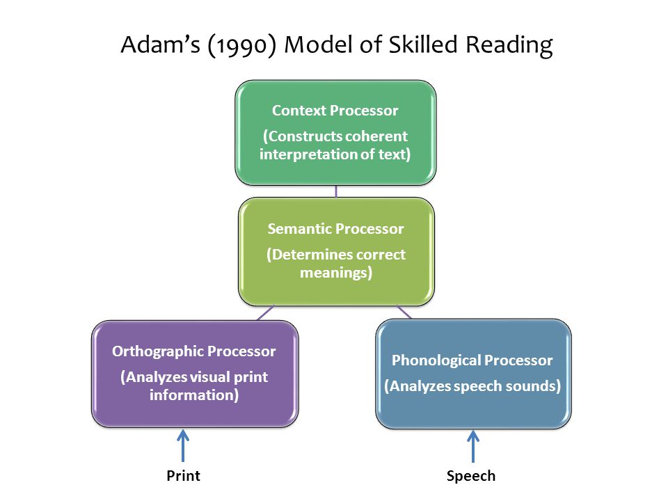 Adam's (1990) Model of Skilled Reading