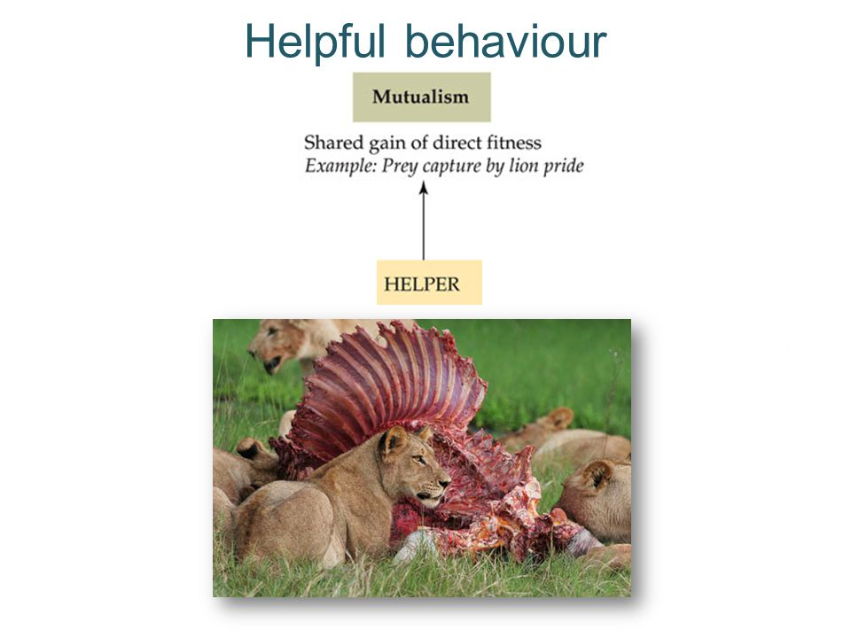 Helpful behaviour