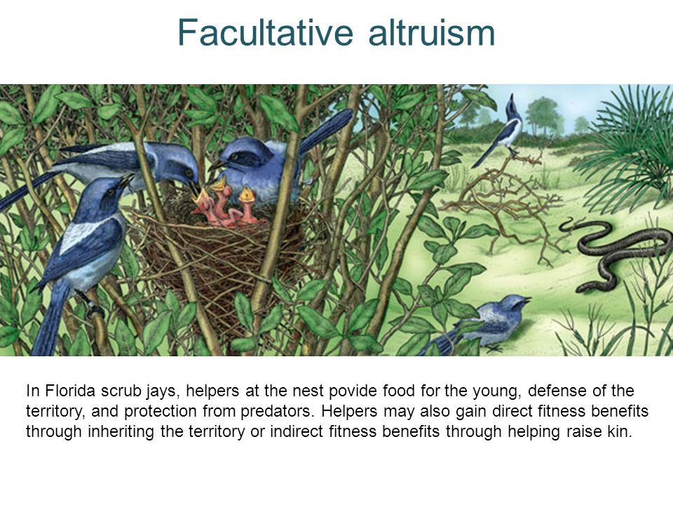 Facultative altruism