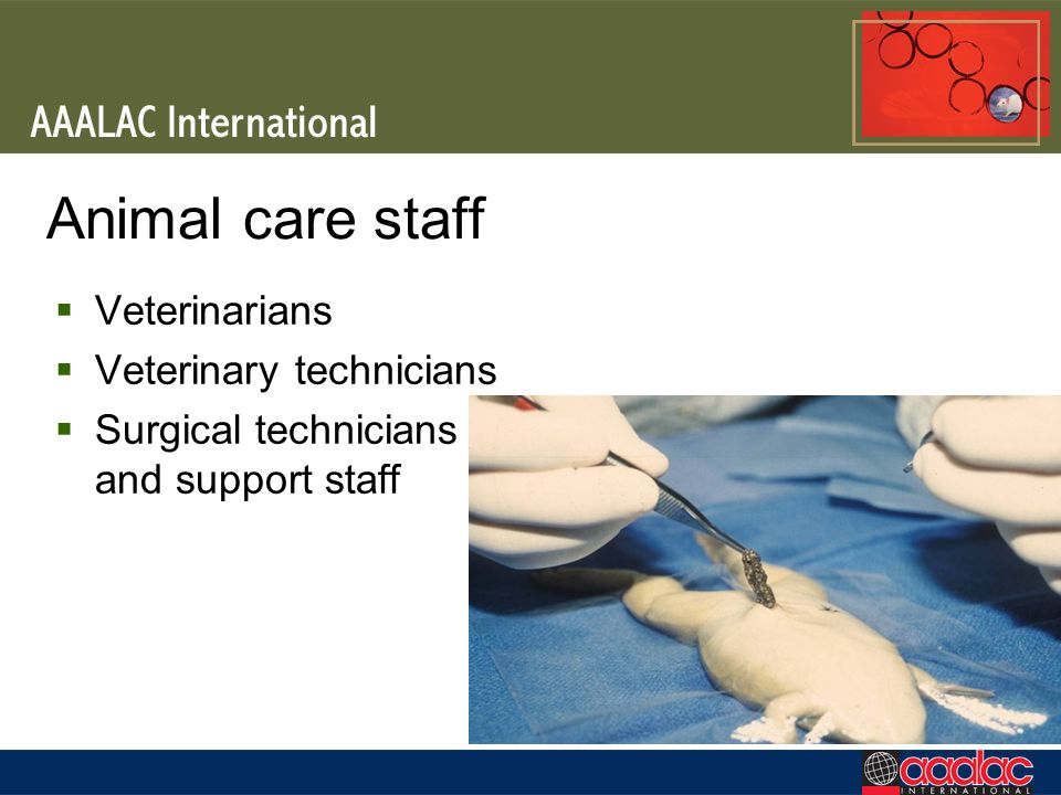 Animal care staff Veterinarians Veterinary technicians