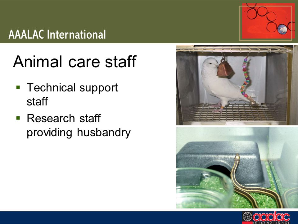 Animal care staff Technical support staff