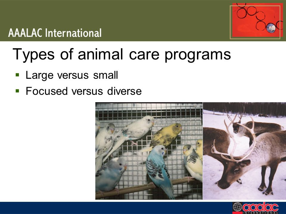 Types of animal care programs