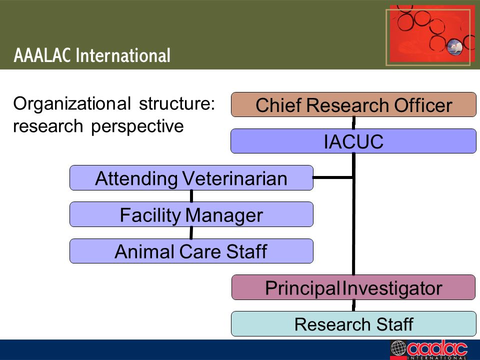 Organizational structure: research perspective