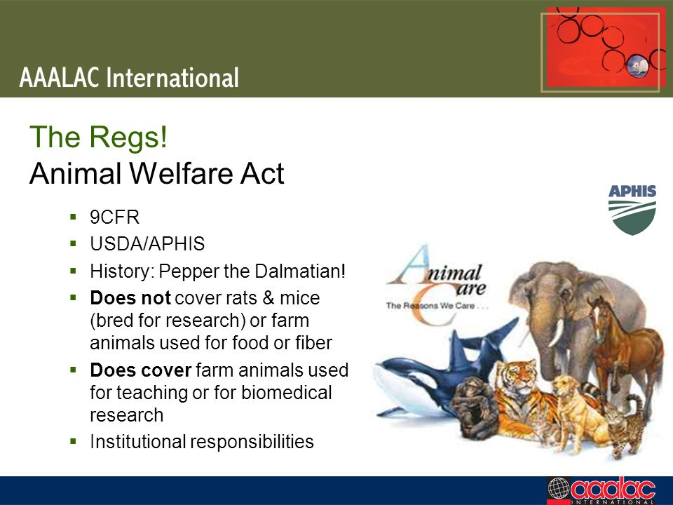 The Regs! Animal Welfare Act