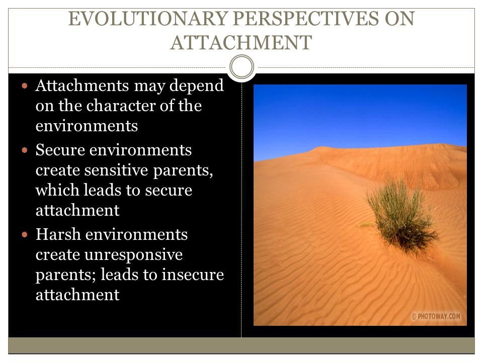 EVOLUTIONARY PERSPECTIVES ON ATTACHMENT