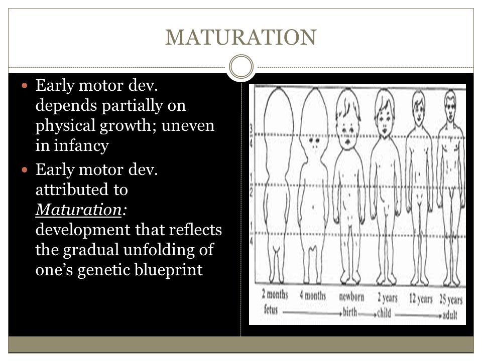 MATURATION Early motor dev. depends partially on physical growth; uneven in infancy.