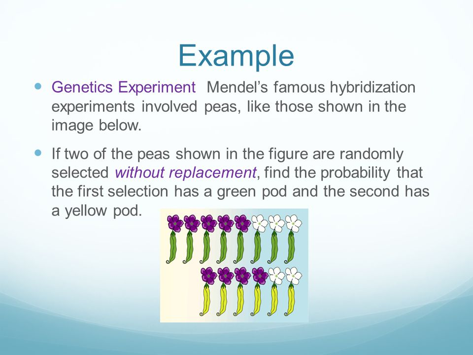 Example Genetics Experiment Mendel's famous hybridization experiments involved peas, like those shown in the image below.