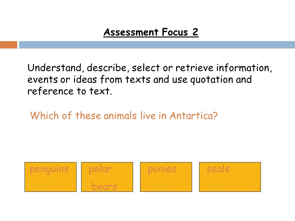 Which of these animals live in Antartica