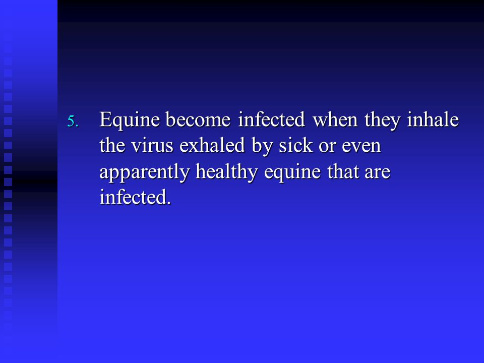Equine become infected when they inhale the virus exhaled by sick or even apparently healthy equine that are infected.