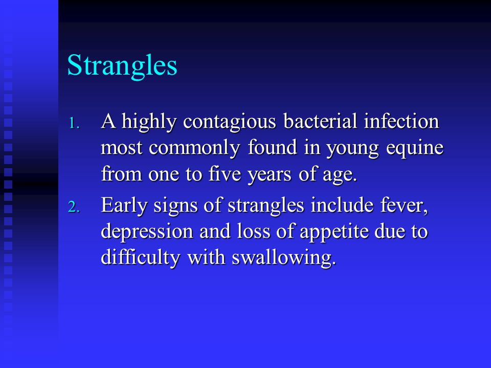 Strangles A highly contagious bacterial infection most commonly found in young equine from one to five years of age.