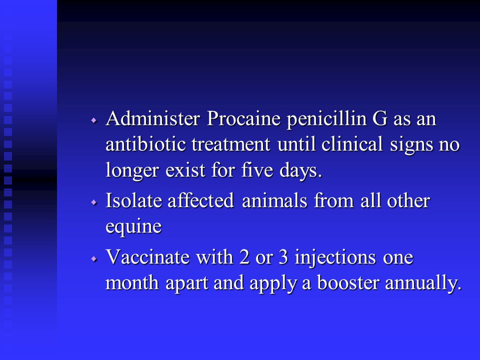 Administer Procaine penicillin G as an antibiotic treatment until clinical signs no longer exist for five days.