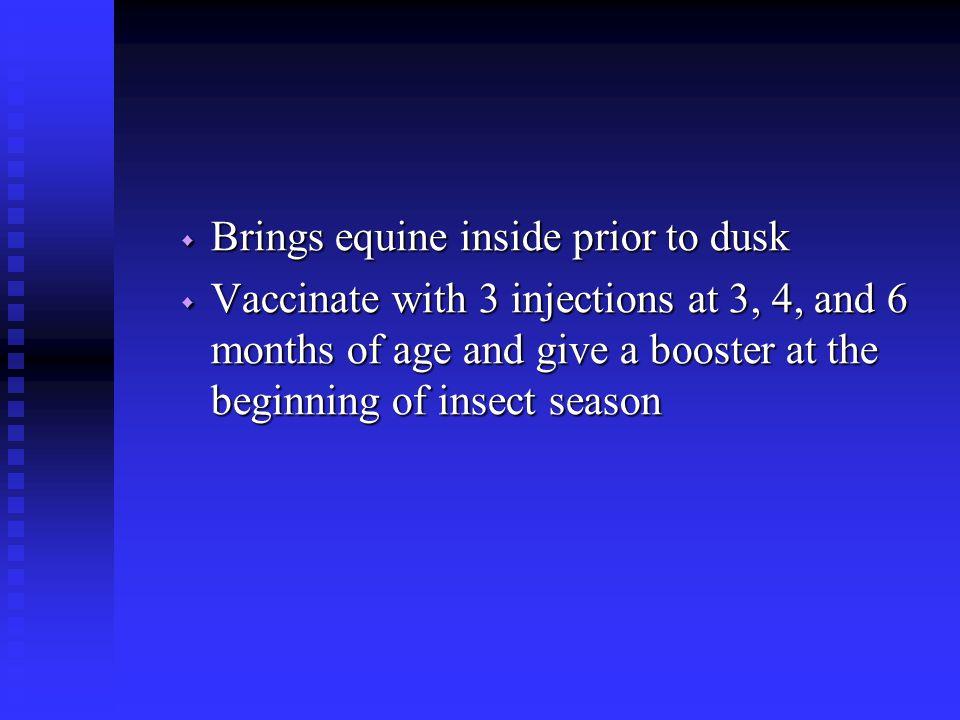 Brings equine inside prior to dusk