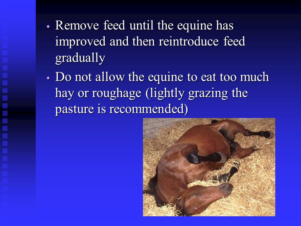 Remove feed until the equine has improved and then reintroduce feed gradually