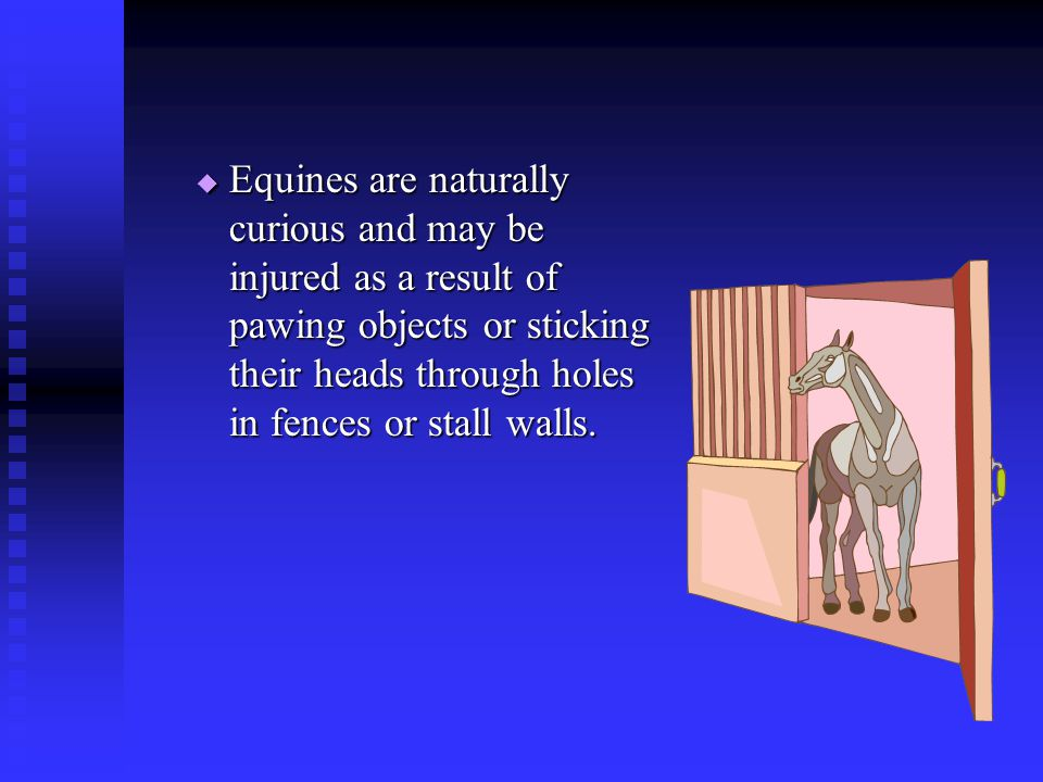Equines are naturally curious and may be injured as a result of pawing objects or sticking their heads through holes in fences or stall walls.